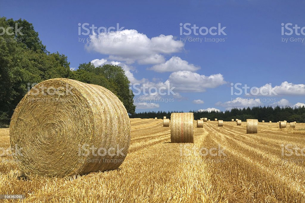 Equidistantly spaced round hay bales in newly mown field royalty-free stock photo