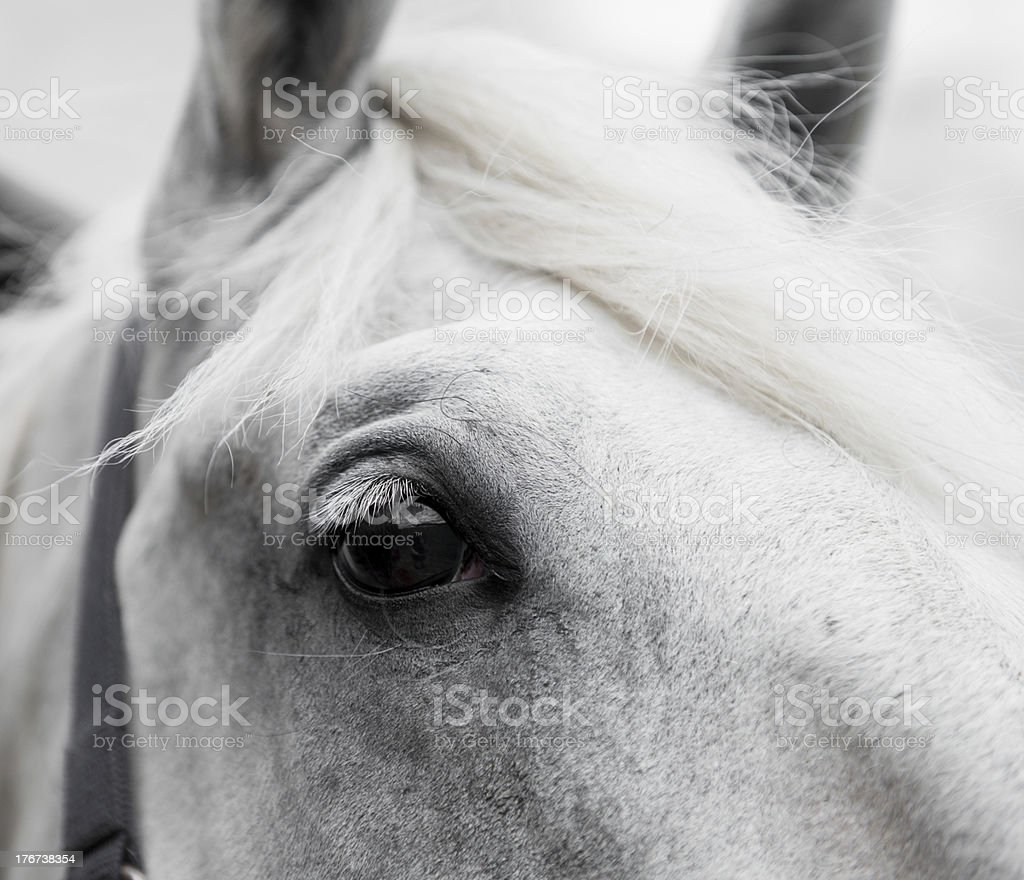 Equine beauty royalty-free stock photo