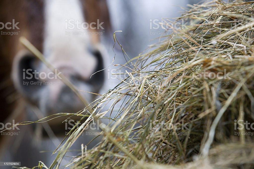 Equine Delight stock photo