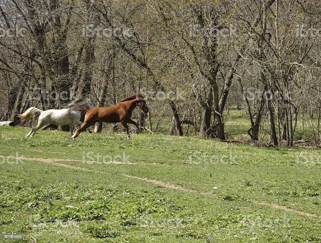 equine running royalty-free stock photo