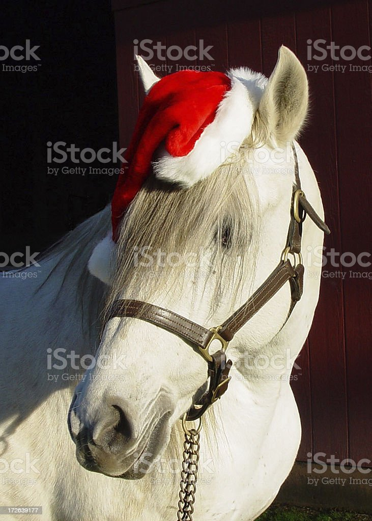Equine Santa Horse Funny Clause Red Christmas royalty-free stock photo