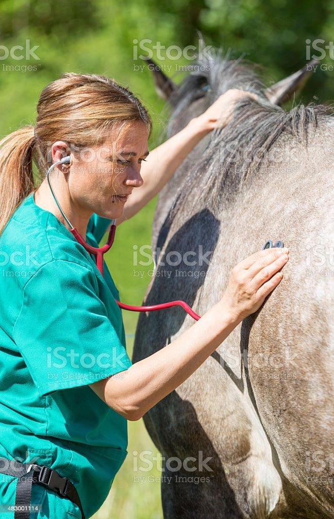 Equine veterinary stock photo