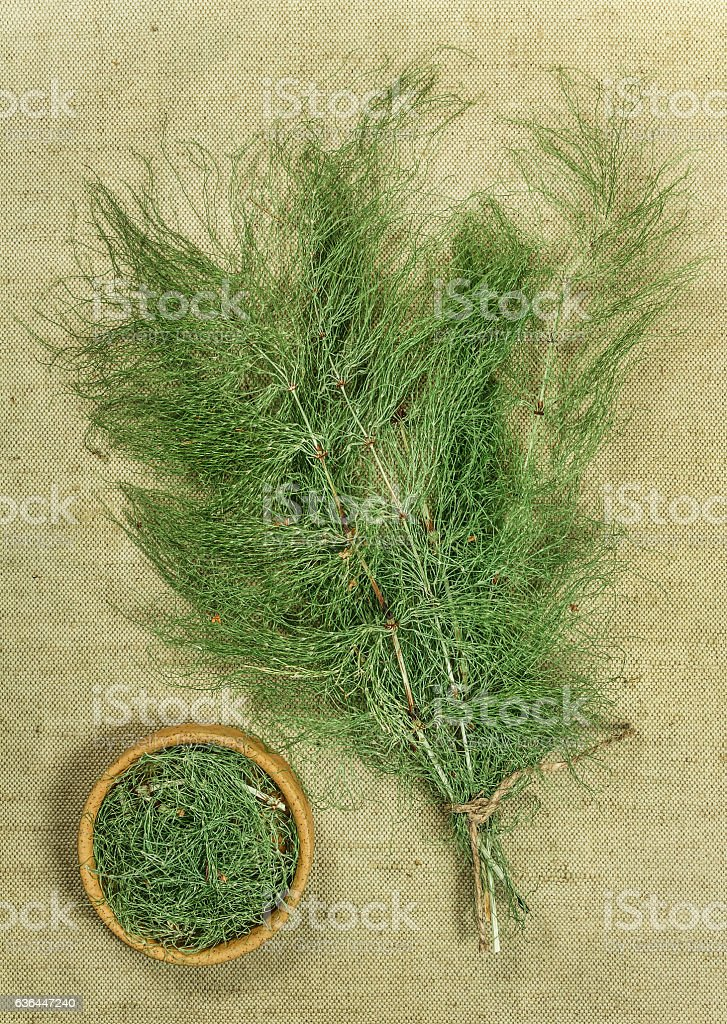 Equisetum, horsetail. Dried herbs. Herbal medicine, phytotherapy stock photo