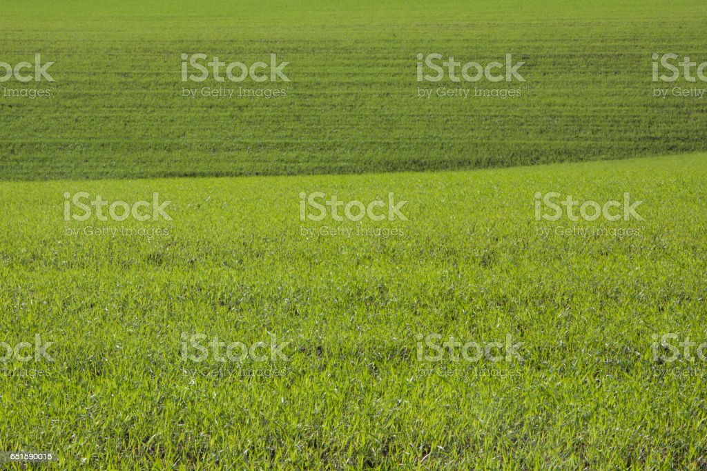 Erba stock photo