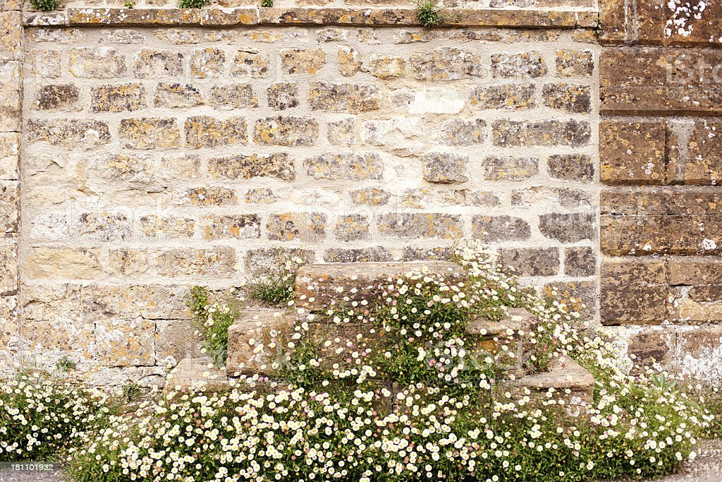 Erigeron Daisies and mounting block stock photo