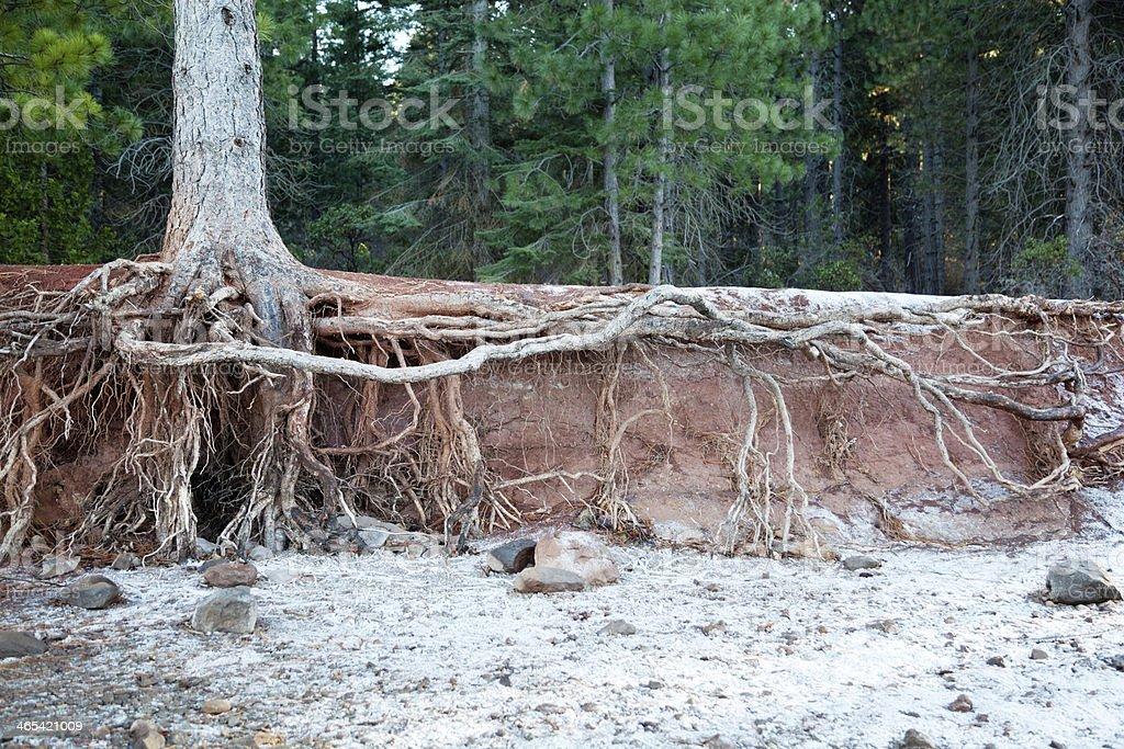 Eroded Lake Shore stock photo
