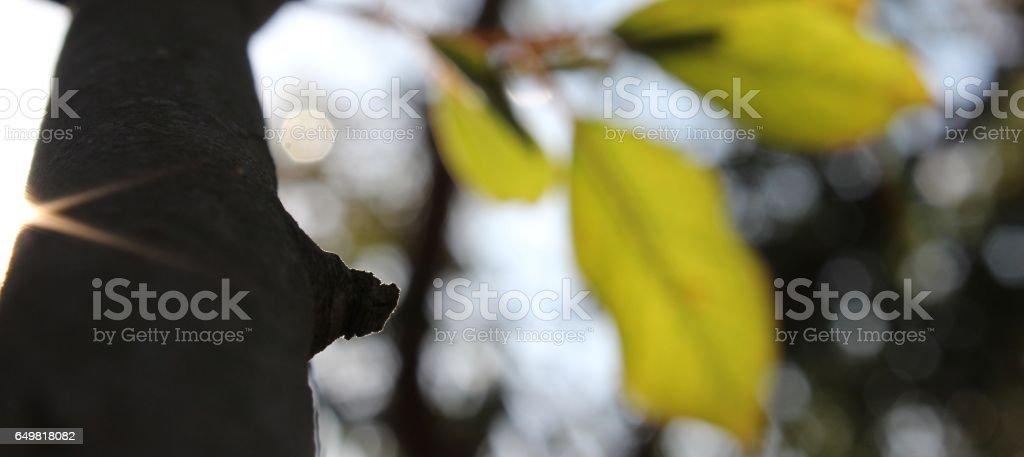 Erquickend stock photo