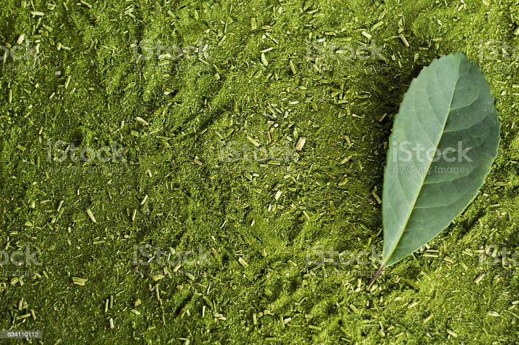 Erva-mate 'yerba mate' Southern Brazil. stock photo