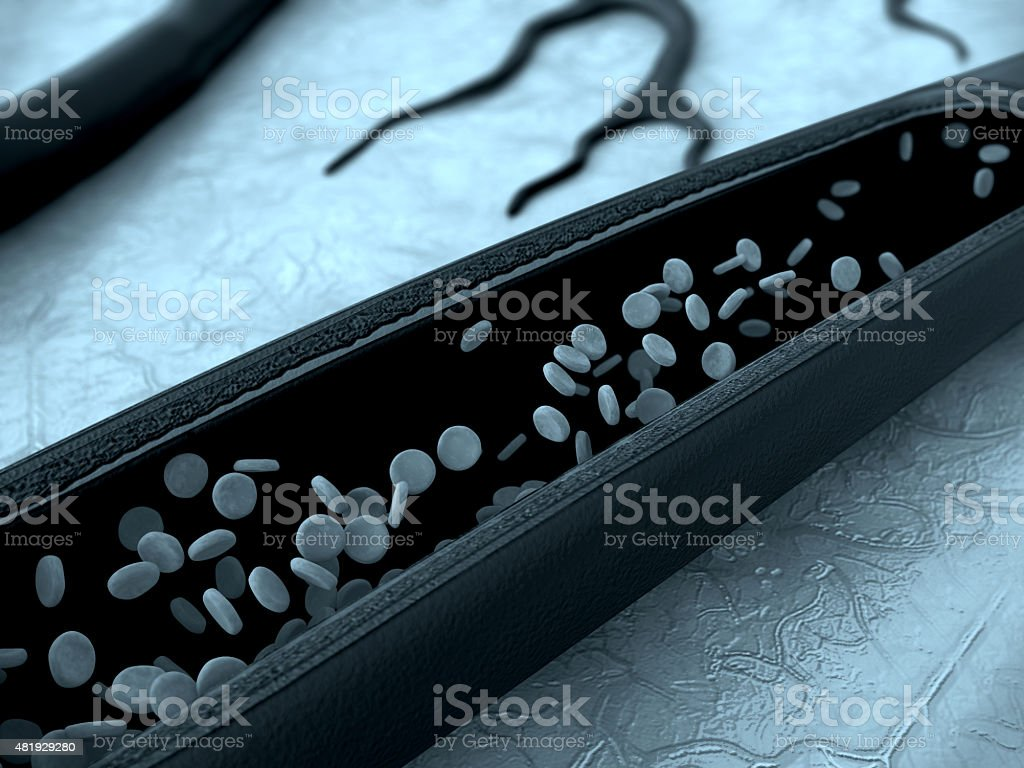 erythrocyte, vein stock photo