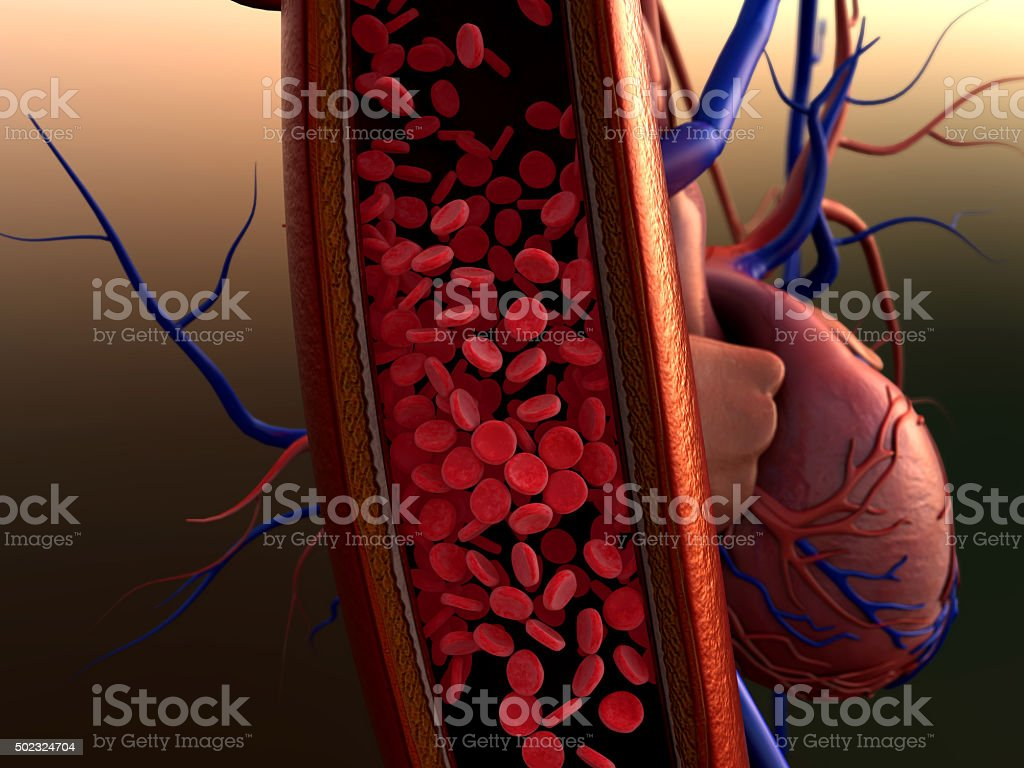 erythrocytes in the vein stock photo