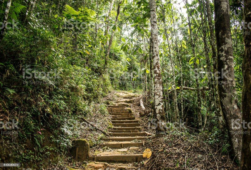 Escada e Natureza - Parque Nacional do Caparaó stock photo