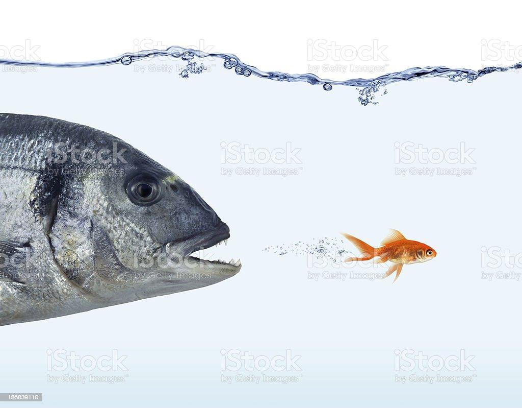 Escape From Big Fish stock photo