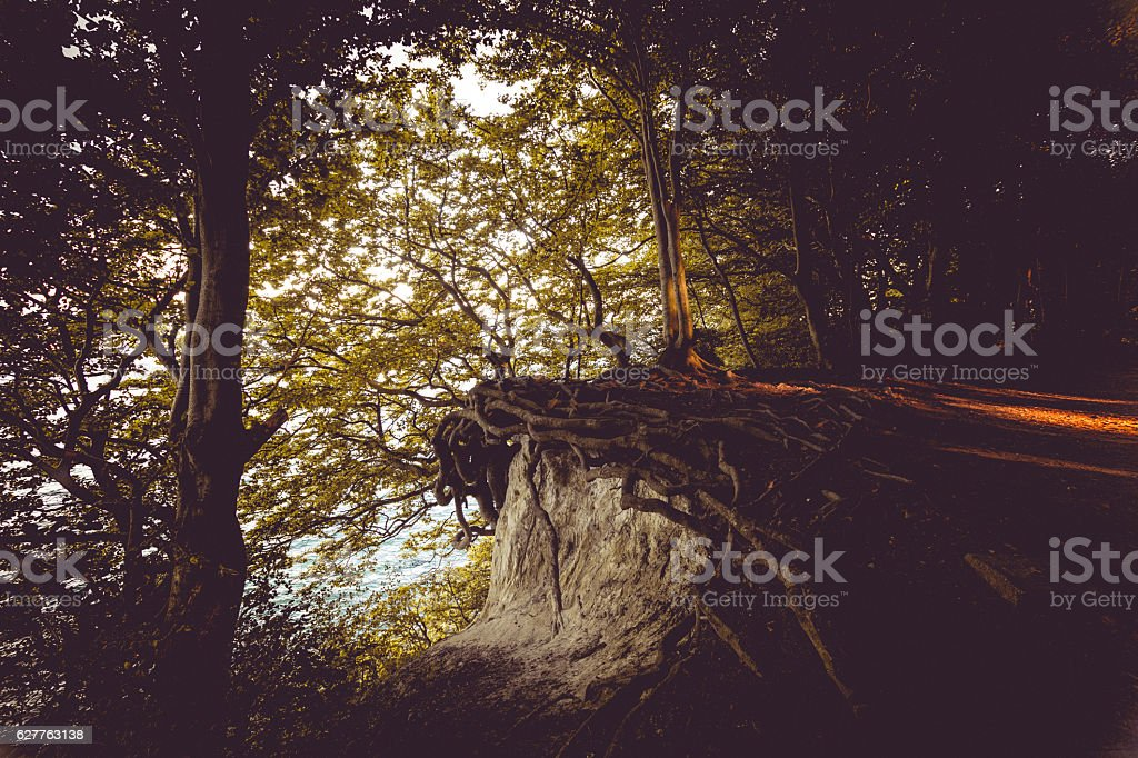 escaping dark magic spooky forest stock photo