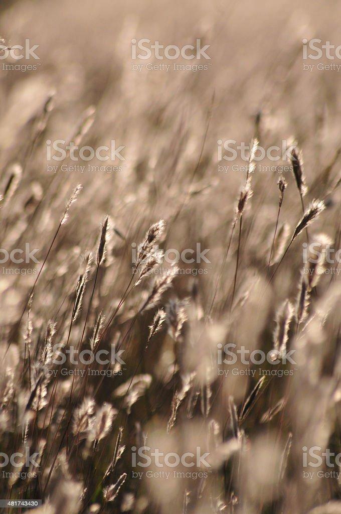 Escena soleada en un campo el trigo stock photo