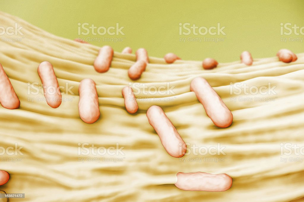 Escherichia Coli (E. Coli.) royalty-free stock photo