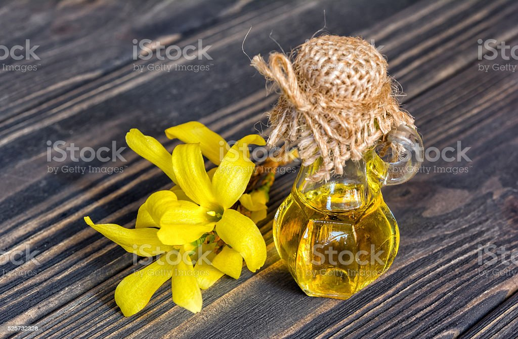 Essence and flower of forsythia stock photo