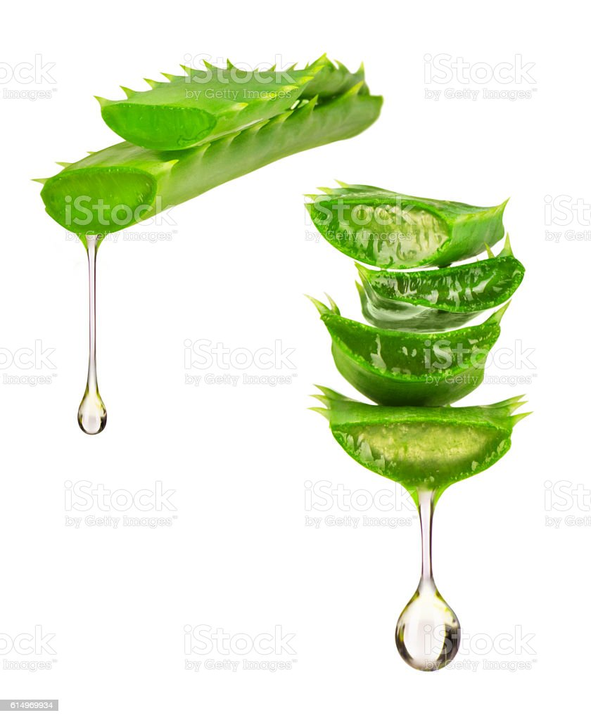 Essence from aloe vera plant drips from the leaves stock photo