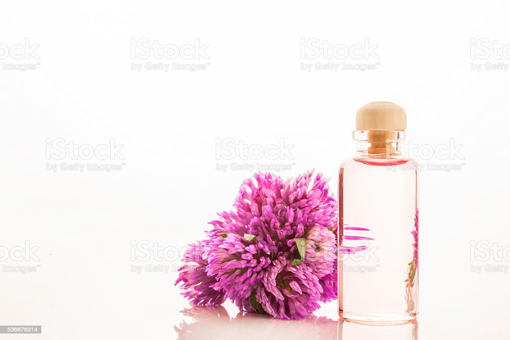 Essence of red clover flowers isolated stock photo