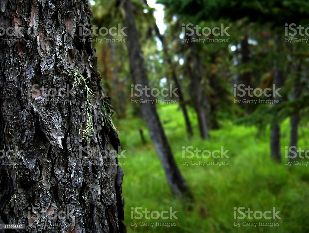 Essence of the Woods stock photo