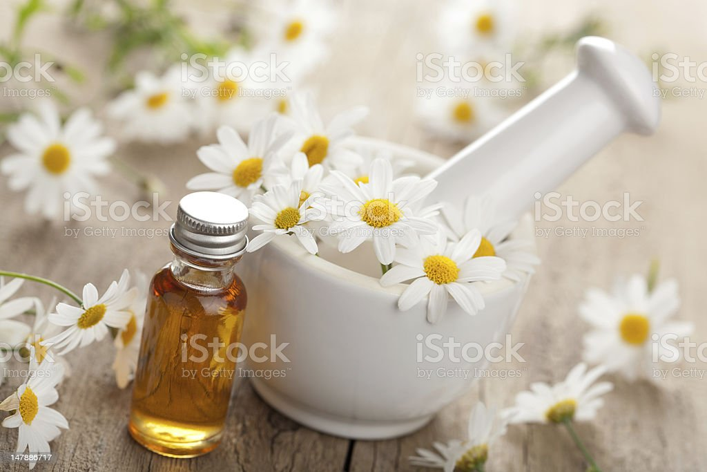 essential oil and camomile flowers in mortar stock photo