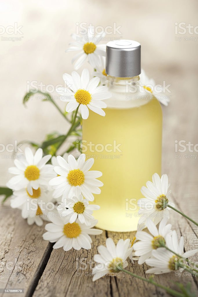 essential oil and camomile flowers royalty-free stock photo