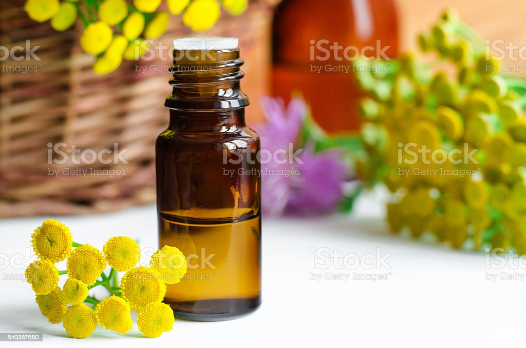 Essential tansy oil stock photo