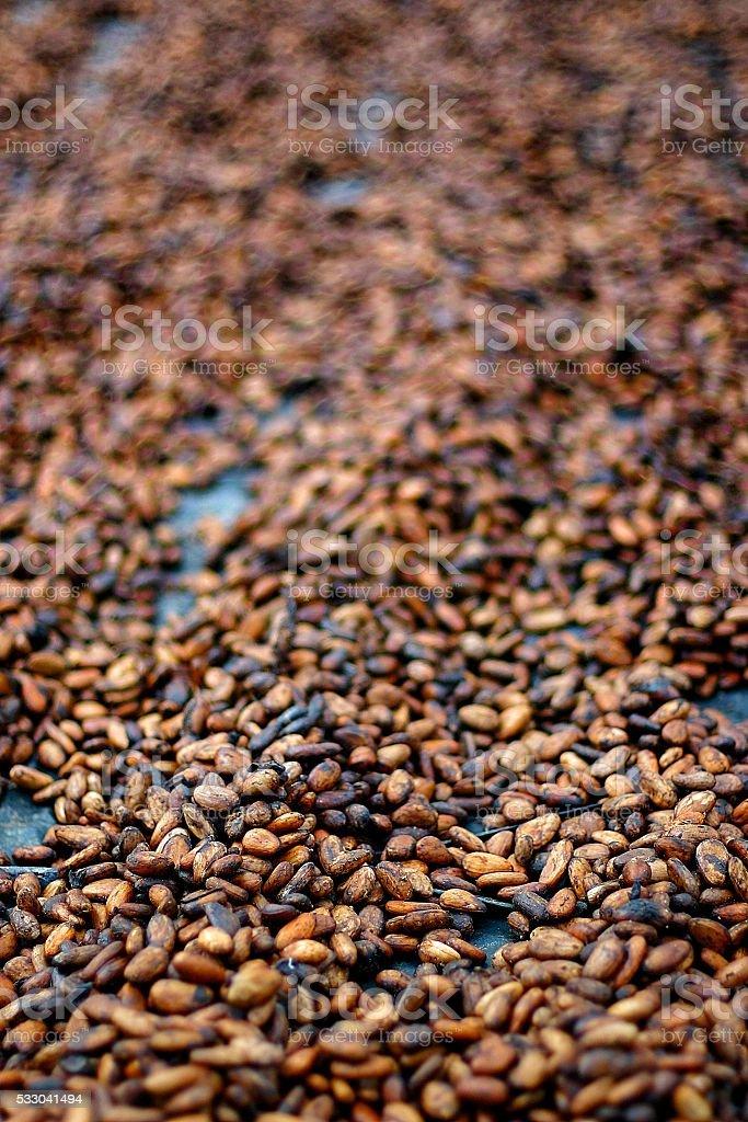 essicazione di fave di cacao - cocoa beans drying stock photo