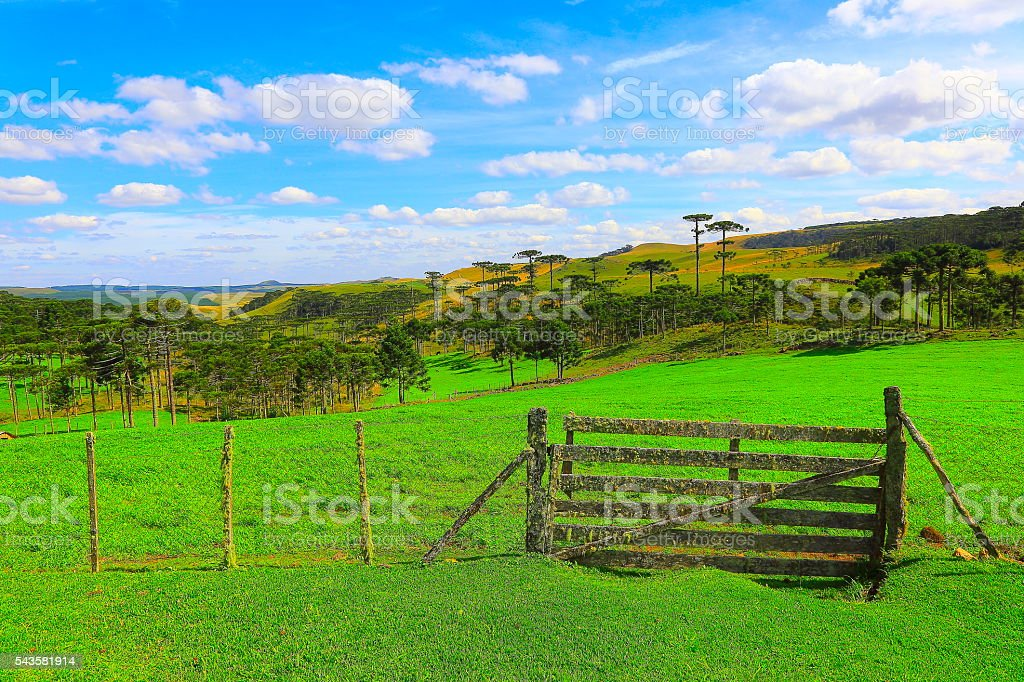 Estância entrance, araucarias brazilian pine, Southern Brazil countryside landscape stock photo