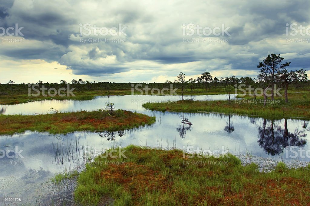 estonian bog royalty-free stock photo