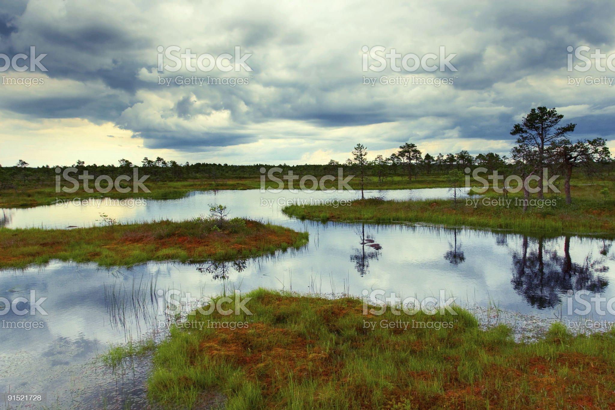 estonian bog royalty-free stock photo