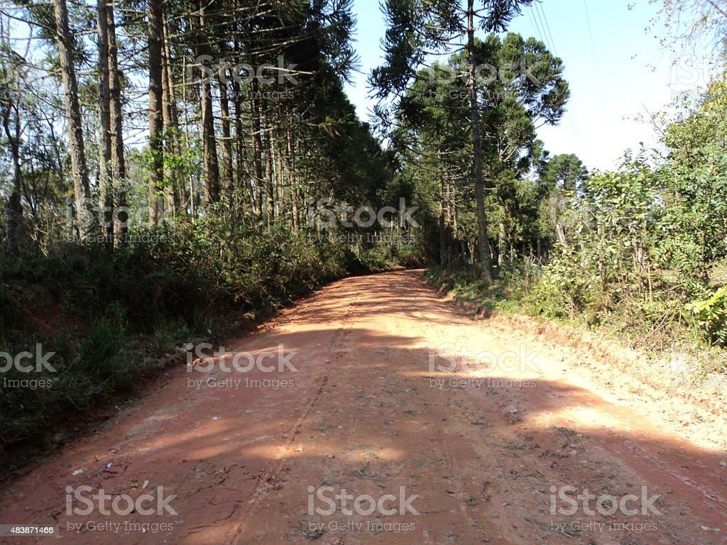 Estrada de terra com pinheiros photo libre de droits