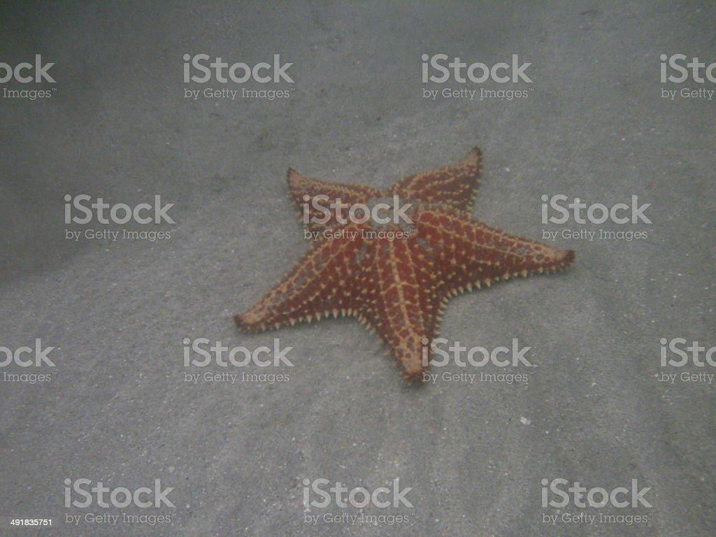 estrella de mar stock photo