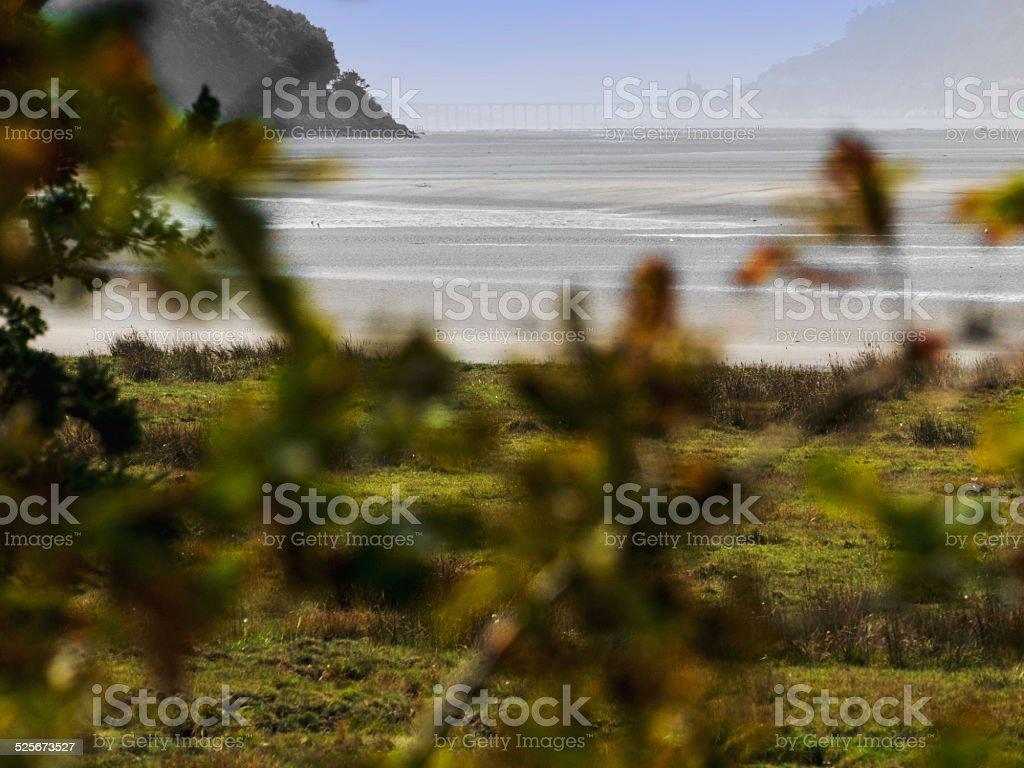estuary stock photo