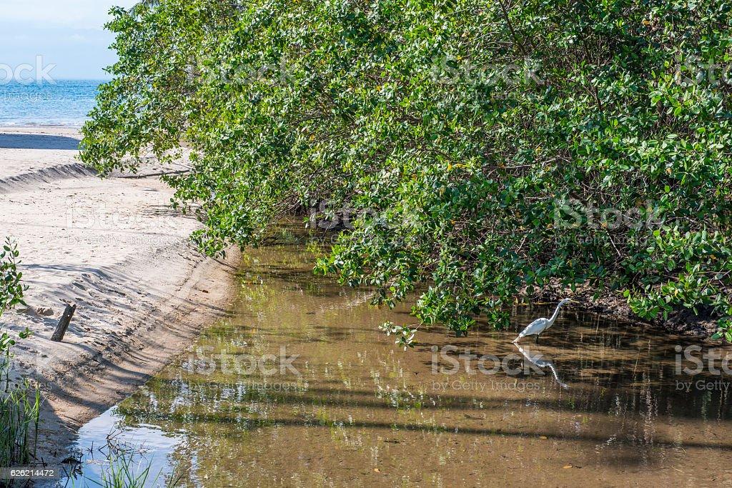 Estuário com vegetação de mangue stock photo