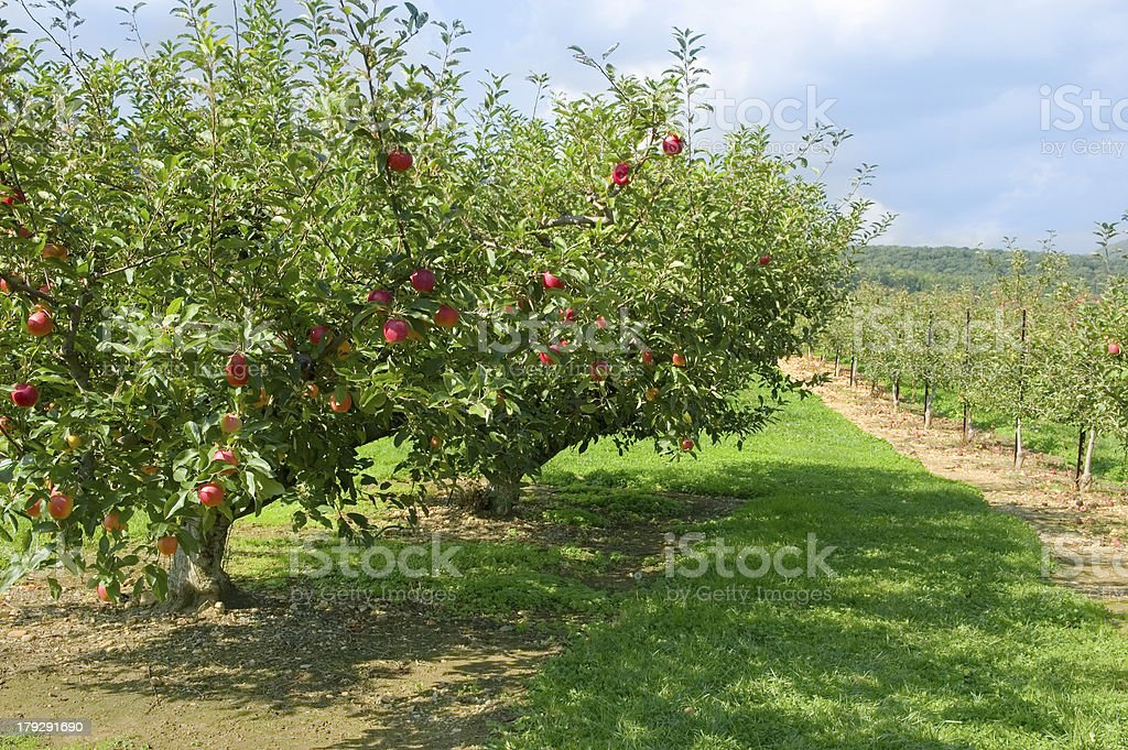 Ethereal Orchard stock photo