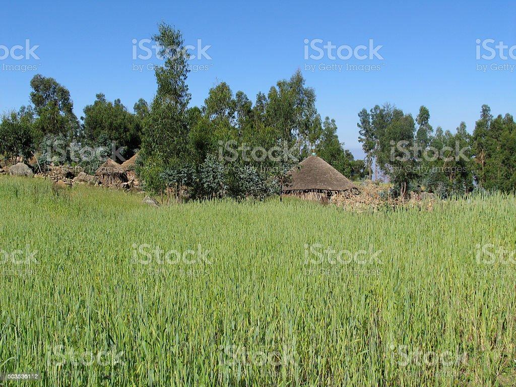 Äthiopisches Bauerndorf mit Getreidefeld stock photo