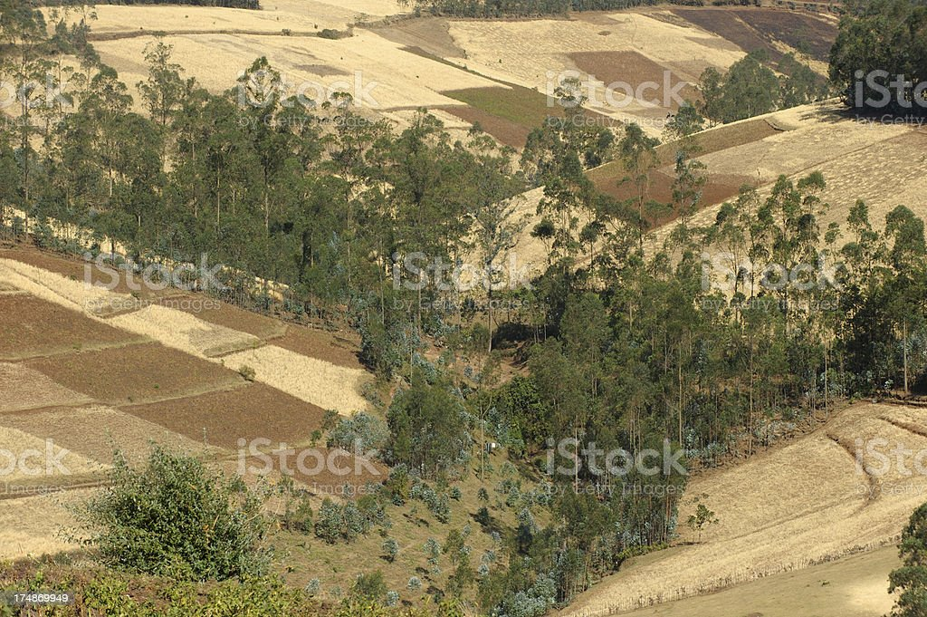Ethiopian fields stock photo