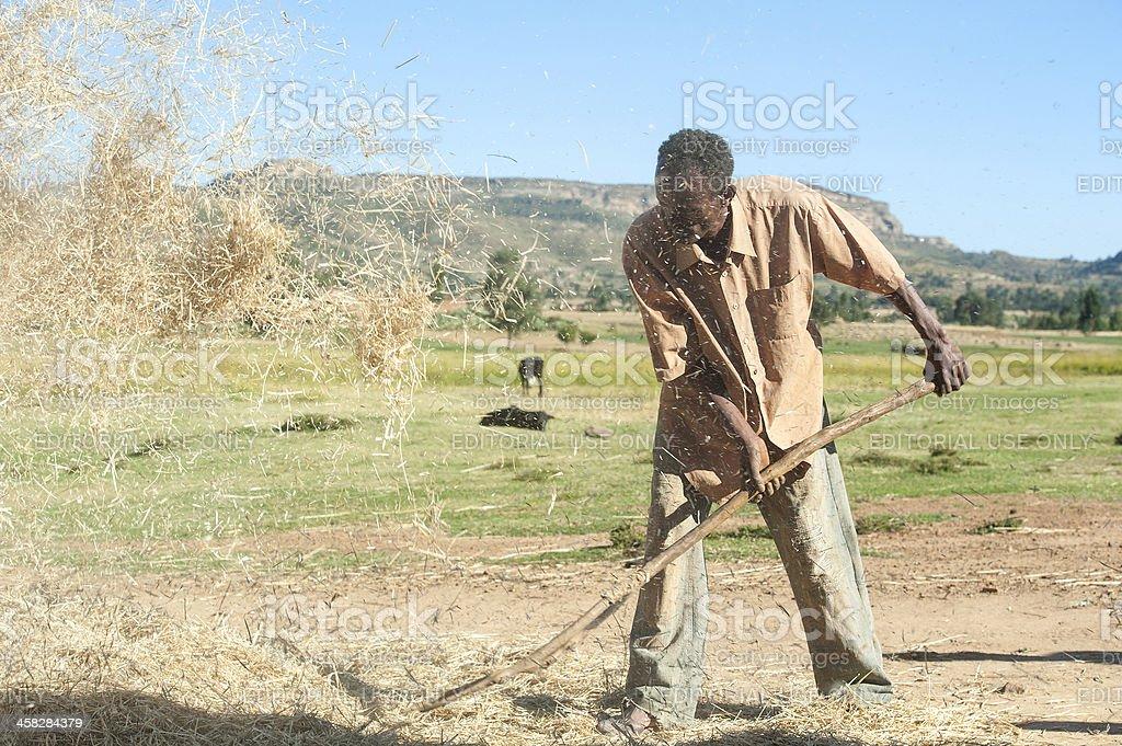 Ethiopian man is winnowing chaff from grain royalty-free stock photo