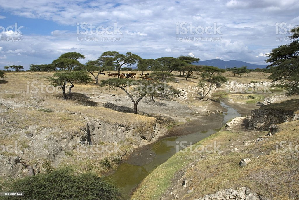 Ethiopian River royalty-free stock photo