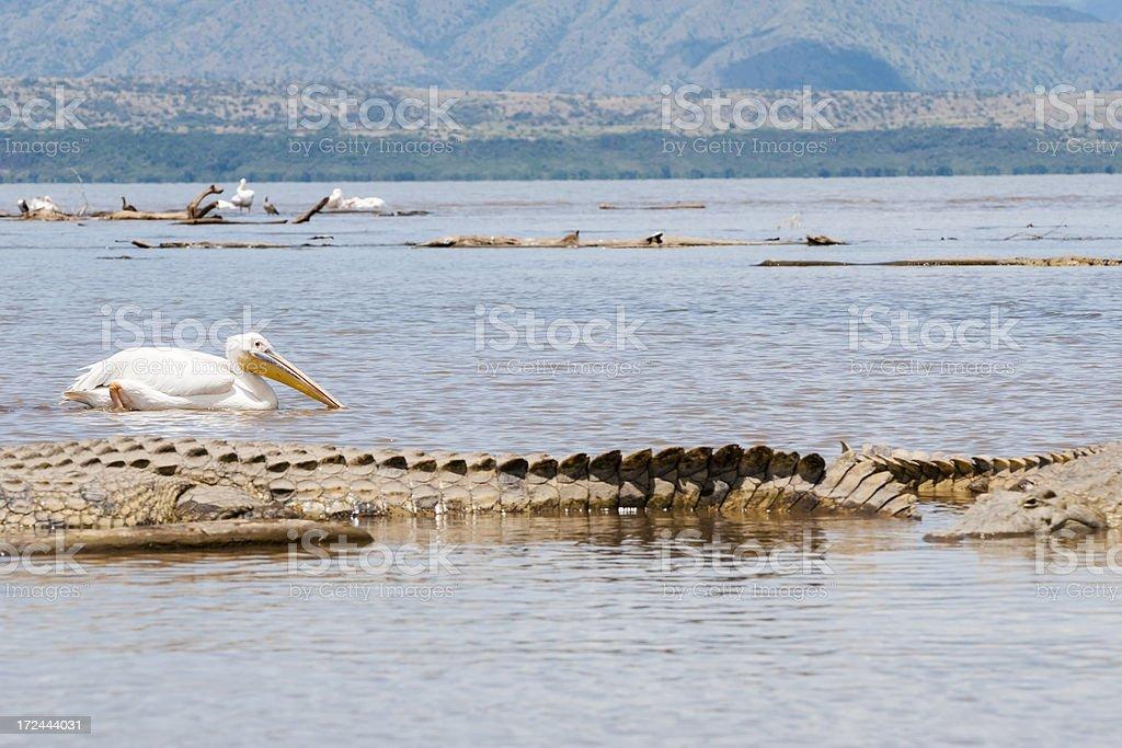 Ethiopian wildlife on Lake Chamo stock photo