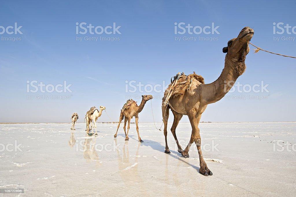 Ethopian Salt Caravan stock photo
