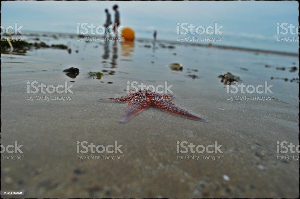 Etoile de mer stock photo
