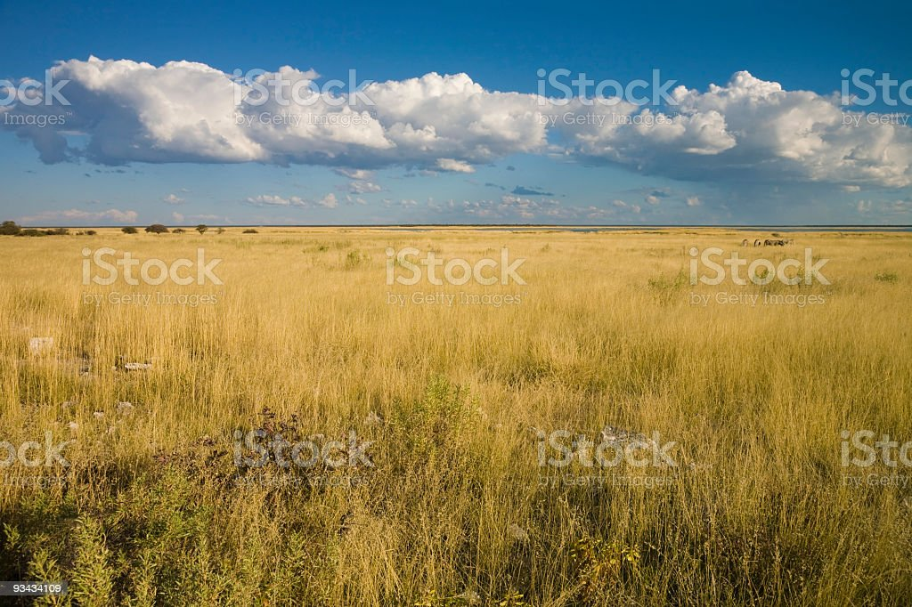 Etoscha Landschaft royalty-free stock photo