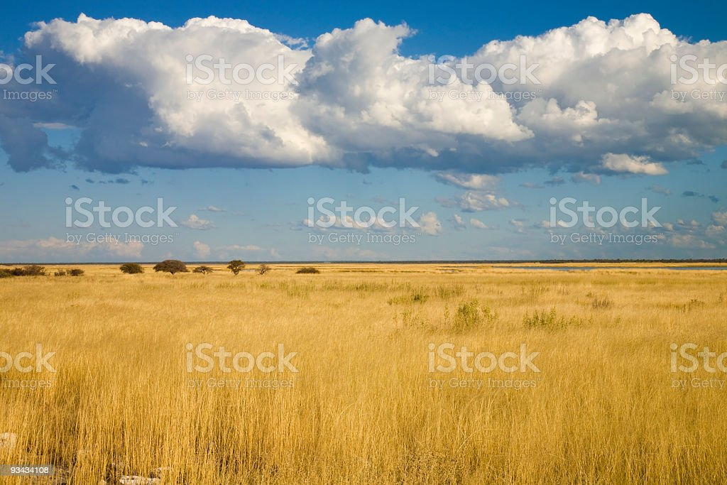 Etoscha Landschaft royalty-free stock photo