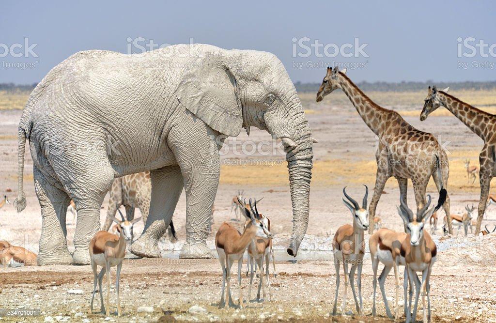 Etosha National Park stock photo