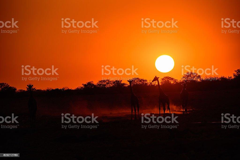 Etosha sunset stock photo