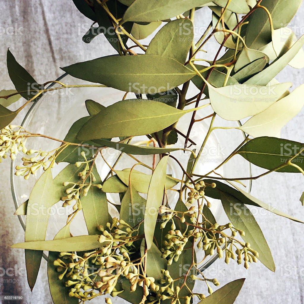 Eucalyptus in Vase stock photo