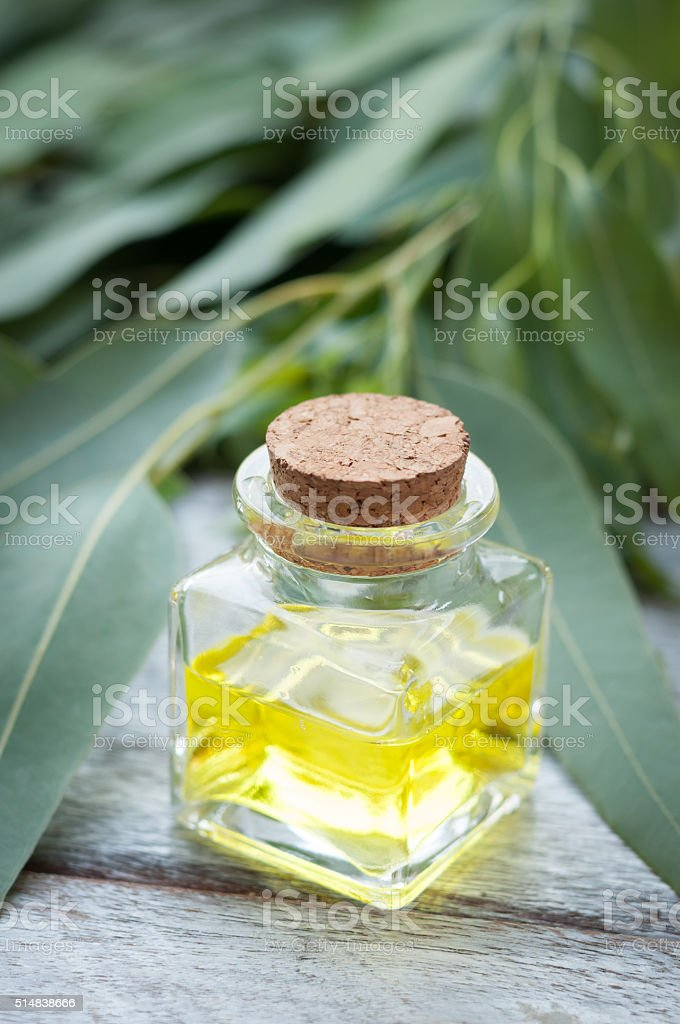 Eucalyptus leaves and essential oil on wooden cutting board. stock photo