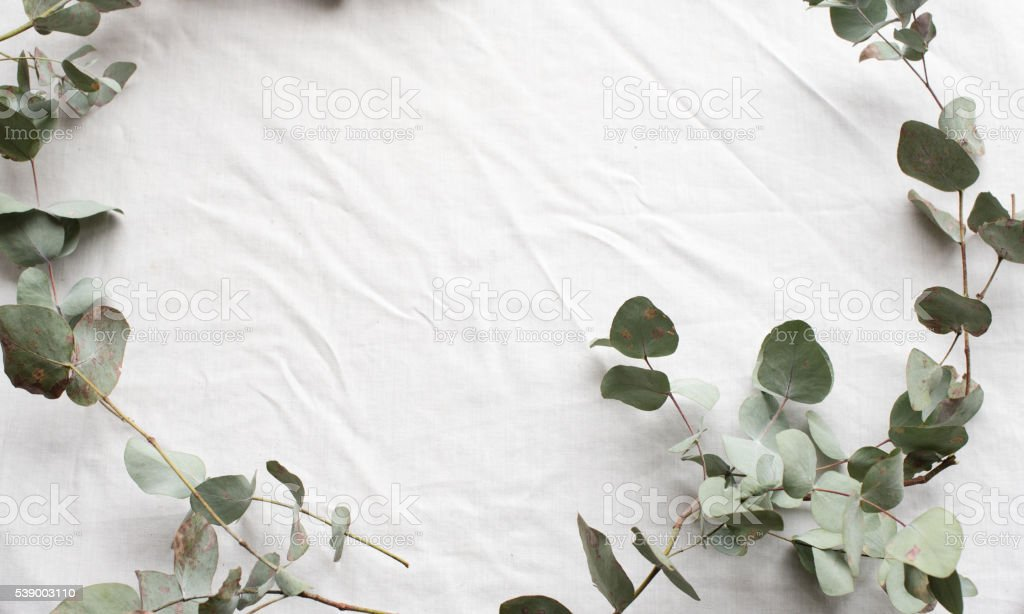 Eucalyptus leaves in curve from above stock photo