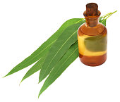 Eucalyptus Oil with leaves